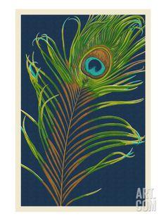 Peacock Feather Art Print by Lantern Press at Art.com