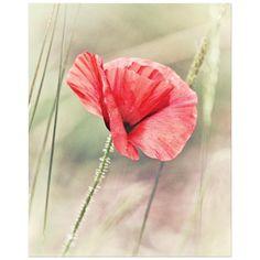 Wild red poppy floral art print
