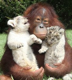 """Pictures that will make you """"Aww!""""  Cute Animal Photos - Check them all out."""