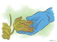Imagem intitulada Grow Passion Fruit Step 21