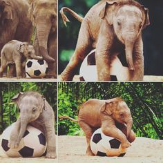 Incase you're having a bad day, look how happy this baby elephant is playing with a soccer ball ⚽️