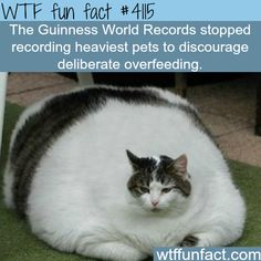 This BETTER be Photo-shopped! (...some people should NOT have pets)  -  WTF? weird and not-so-fun facts