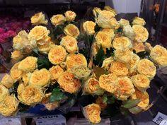 #Rose #Rosa #Secret Sensations; www.barendsen.nl