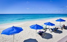 Cayman Reef Resort Beach with Umbrellas and Beach Chairs Red Leather Chair, Leather Wingback Chair, Navy Blue Living Room, Farmhouse Dining Chairs, Wedding Memorial, Grand Cayman, Beach Chairs, Cayman Islands, Trip Advisor