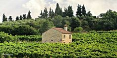 Escape To Italy's Majestic Euganean Hills This Spring | ITALY Magazine