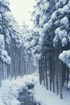 Winter Forest River... feel the cold