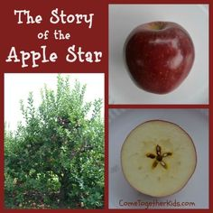 The Story of the Apple Star ~ really cute story which explains why you see a secret, hidden star when you slice an apple in half sideways. I remember my pre-k teacher doing this! Preschool Apple Theme, Apple Activities, Fall Preschool, Autumn Activities, Preschool Activities, Preschool Plans, Apple Unit, Pre School, Sunday School