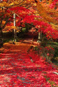 Jinzo-ji temple, #Kyoto, #Japan #red