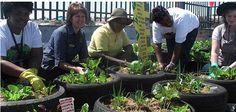 Johannesburg Rooftop Garden Aims to Fight Poverty pinned by dakwaarde – roofvalue – de is gardening Herb Garden, Garden Plants, Permaculture Principles, Urban Farming, Urban Gardening, Financial Literacy, Organic Vegetables, Less Is More, Arts And Crafts Movement