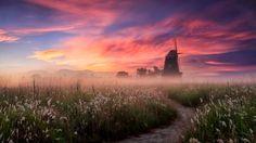 Misty morning - 소래 생태 습지공원..  soerae park ..