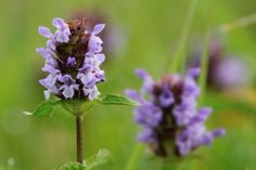 Supporting Healthy Skin with Self Heal Serum