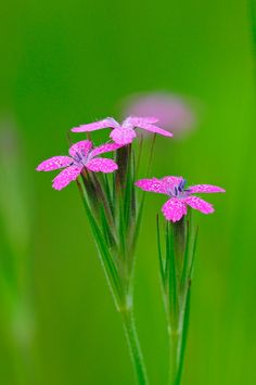 Nature Flowers and Insect Macro Photography