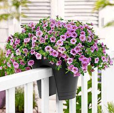kwiaty 807px