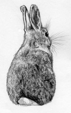 my bunny turns his back on me when he's ticked off // simple black & white sketch/drawing