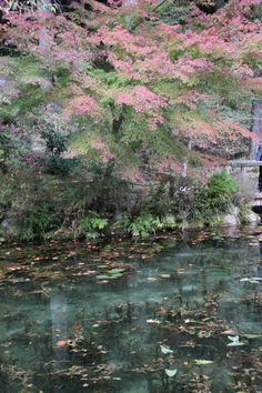 Nameless Pond ( Under an alias: Pond of Monet ) Seki-City Official Site
