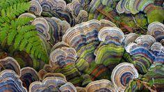 Detalle de hongos en un camino en Port Moody, Columbia Británica