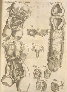 The 2 parts of a male's system: the testes & the penis. The female's: the vagina & the uterus. Arte Com Grey's Anatomy, Anatomy Art, Human Body Unit, Female Reproductive System, Human Body Anatomy, Anatomy Sketches, Medical Anatomy, Vintage Medical, Medical Art