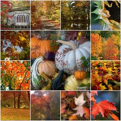 Autumn by Romantic Home, via Flickr  Please visit this sight! It's full of awesome images & photiographic mosaics!