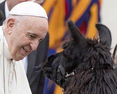 Vatikan.  Paavst Francis tervitab llamat, kuna ta vastab looma kasvatajatele, kes raputab Itaalia linnast Bolzano, enne tema iganädalast publikut Püha Peetruse väljakul