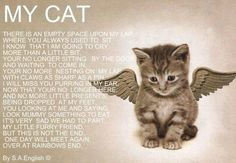 My Cats.Love you Daisy, Candi, Kitty Kitty & Tiggerlili Rip I Love Cats, Crazy Cats, Cute Cats, Gato Angel, Pet Poems, Cat Loss Poems, Loss Of Cat Quotes, Animals And Pets, Cute Animals