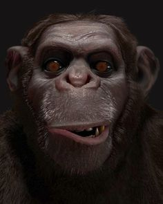 Chimp by Luigi Monaldi, via Behance