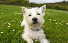 Dogs Portfolio - Pets - Mark Rogers Dog Portraits