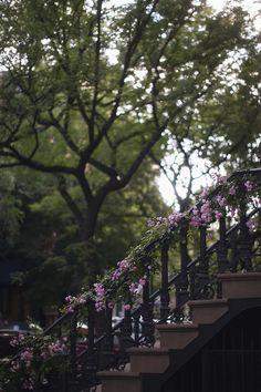 New York flowers City Photography, Landscape Photography, Nature Photography, Greenwich Village, West Village, Gray Garden, Townhouse Exterior, Bleecker Street, Brooklyn Brownstone