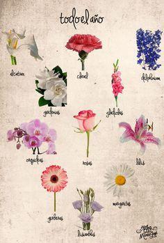 Flores que se dan todo el año