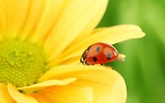 Sunflowers and Ladybugs! The bestest!