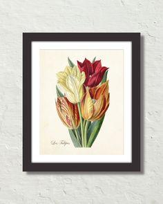 Vintage Tulips No. 42 Botanical Canvas Art Print