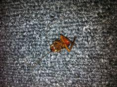 Roach found on 06/03/2013. Dead!