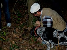 Cerca del Tartufo!  The search of White Truffle! Il Trifolao ed il suo cane cercano il diamante grigio ...il Tartufo Bianco. La Truffe Blanche!
