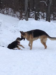 how to train a seeing eye dog