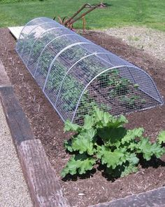 Squirrel proof garden cage I need this if I expect to eat the
