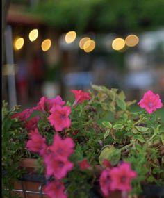Hootsuite Seafood Restaurant, Plants, Flora, Plant, Planting