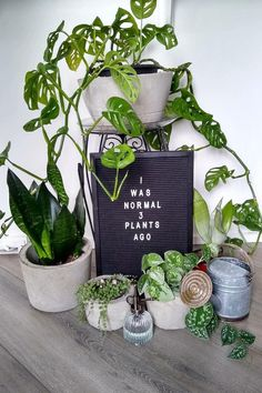 Plant Art, Plant Decor, Funny Garden Signs, Funny Signs, Plants Quotes, Plants Are Friends, Plant Aesthetic, House Plants Decor, Mother Plant