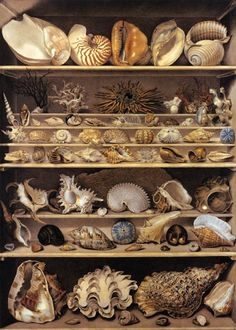 Centuries Past LEROY DE BARDE, Alexandre-Isidore Selection of Shells Arranged on Shelves Watercolour and gouache on heavy paper, 125 x 90 cm Musée du Louvre, Paris Louvre Museum, Cabinet Of Curiosities, Shell Collection, Seashell Art, Starfish, Seashell Display, Art Graphique, Shell Crafts, Displaying Collections