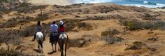Enjoy a Cabo Horseback riding adventure through the Mountains and Desert, in the outskirts of Cabo San Lucas. Witness spectacular ocean Views and scenery. Desert Tour, Cabo San Lucas, Horseback Riding, Deserts, Scenery, Ocean, Tours, Adventure, Mountains