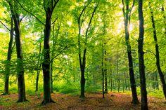 Gisteren was ik in het bos. Op zoek naar drie bomen, drie bomen die ik gekend had. Drie bomen die alle drie een tak hadden verloren. Drie bomen die daar al