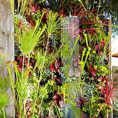 Outdoor Shower from Sunset Magazine. Exotic water-loving plants like bloodleaf and the carnivorous pitcher plant grow in mesh pouches that line the shower Outdoor Living Areas, Outdoor Rooms, Outdoor Showers, Living Spaces, Living Room, Dig Gardens, Outdoor Gardens, Carnivorous Pitcher Plant, Plante Carnivore