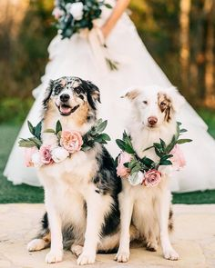 Using silk flowers at your wedding? These are 10 tips you gotta know, and we are not so casually in love with the inspo ideas here too. Exhibit A? These floral wreaths for the dogs of honor Wedding Pets Decor Cute Funny Animals, Cute Baby Animals, Wedding Goals, Dream Wedding, Wedding Ideas, Wedding Favors, Wedding Venues, Wedding Invitations, Wedding Week