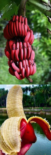 The hand is thue same color as the banana from bad photoshop. This place is a fraud. You will not get red bananas.