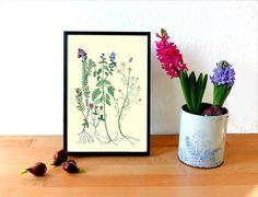 Illustrationen - *Kräuter* Kunstdruck - ein Designerstück von Frau-Ottilie bei DaWanda