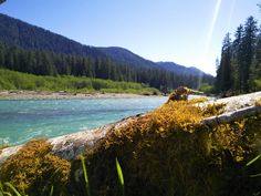 Hoh River, Hoh Rainforest, WA [3968x2976] #nature and Science