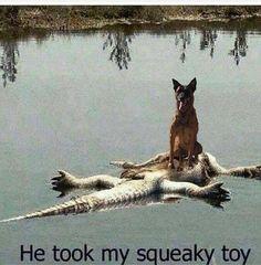 How I imagine Australian pets!