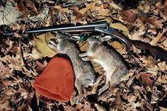 Hares Without Hounds: Kicking Up Cottontails - Game & Fish Rabbit Hunting, Squirrel Hunting, Pheasant Hunting, Turkey Hunting, See Games, Hare, Guns, Habitats, Kicks