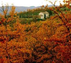The autumn leaves in Tuscany    vanessa forbes