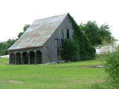 Old wooden barn with Ivy. Photo taken in Williamson Co., Tx...Art for sale by Rustic Images