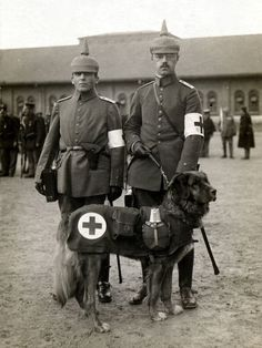 Leonberger serving in WWI World War One, First World, Dog Soldiers, German Uniforms, War Dogs, German Army, World History, Military History, Animals And Pets