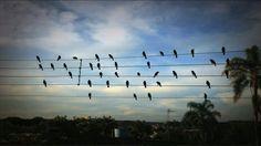A volte le sagomette nere degli uccelli appollaiati sui fili elettrici dell'alta tensione, somigliano alle note musicali su di un pentagramma e forse è pro